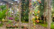 fruits-en-suspension