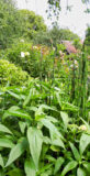 petite-foret-jardin-2