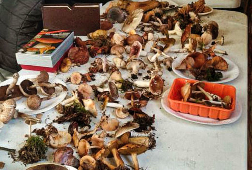 identification-par-les-mycologues