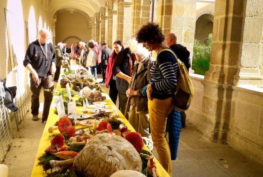 stand-d'exposition-des-champignons-3