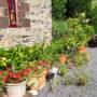 espace-agrumes-dans-jardin-3