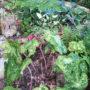 la-plante-crapaud-dans-jardin-3